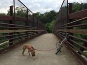 Dog & Dahon: Smokin' on the Rusty Bridge