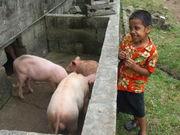 De 4 little pigs