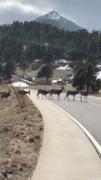 deer crossing at ncar