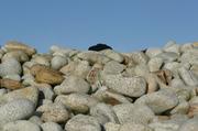 1 black stone