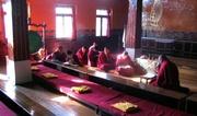 Dharamsala - monks studying