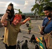 Malaysia monkeys