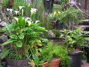 Esalen Art Barn Garden