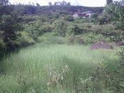 Switchgrass in Nepal