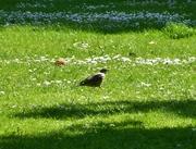 Birdwatch5