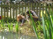Pond Visitors