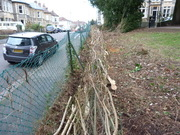 Hedge-laying is in progress