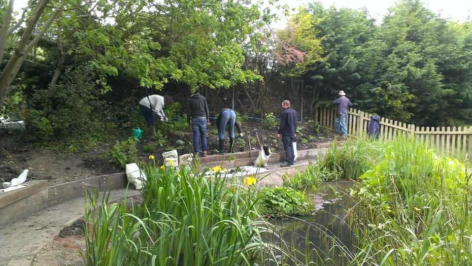 Volunteers planting the pond bank