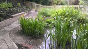 Pond bank and pond May 10th 2015