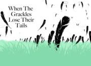 When the Grackles Lose Their Tails