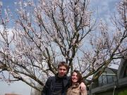 L'albero di albicocche