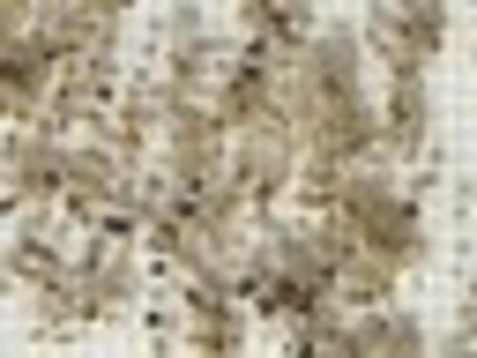 Saummur 1x ist + griglia