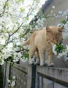 """Un chat -""""poète"""" .."""