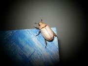 Bugs on Blue