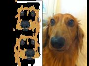 copydog