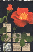 postcard for maureen #8922