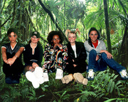 Spice Jungle