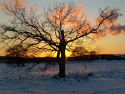 Sunset: Behind the Tree.