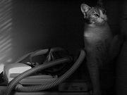CPAP-Cat