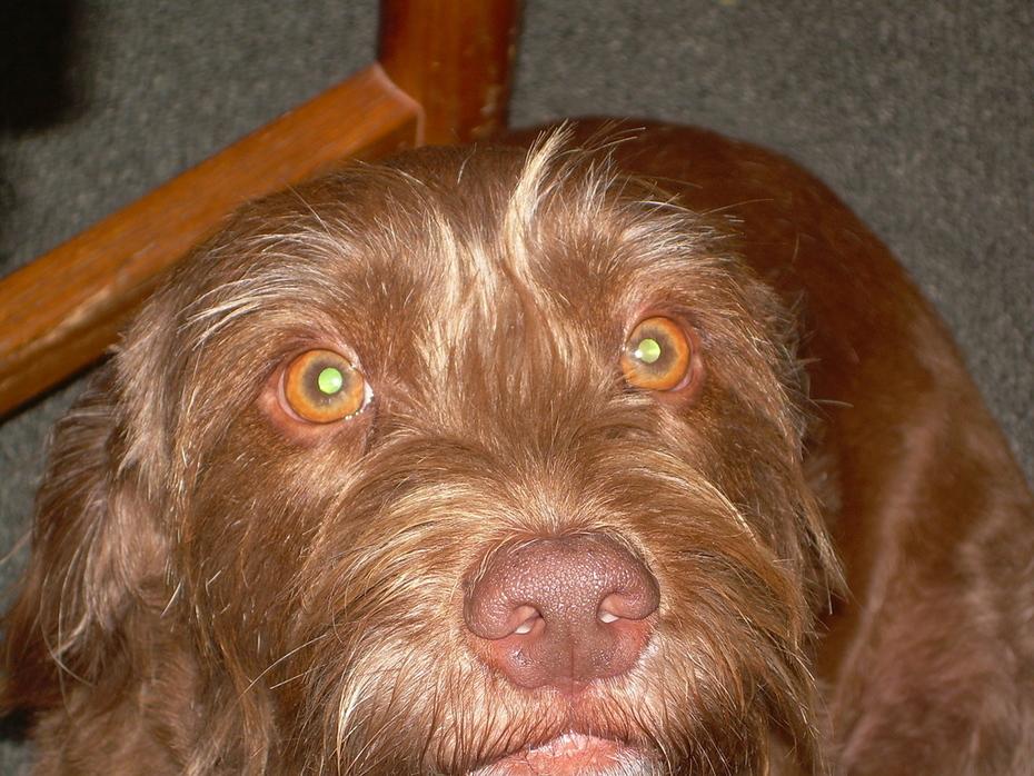 Charlie-Dog peeking at you!