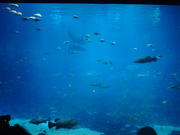 Aquarium Theater