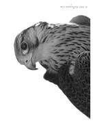 The Falcon Portrait