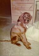Puppy Sasha