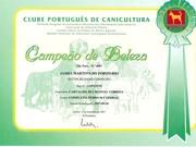 Diploma CH Portugal