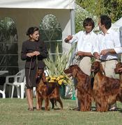 BIS Breeder Group (all Breeds) at MediterraneanWinner08