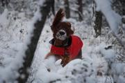 BaiLee the Snow Dog