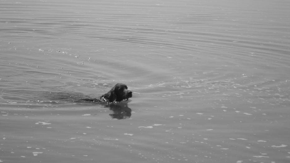"James swimming ""hunting"" seabirds - 2009"