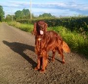 Nice walk this summer evening :)