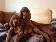 Millie and Maisie