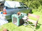 Shavington Show willow in tent.