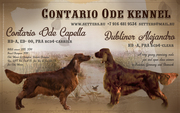 """Contario Ode """"T""""-litter at the end of October!"""
