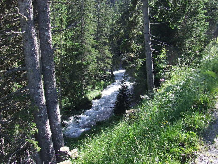 Wald Arosa bemiso