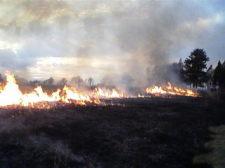 grassfire3