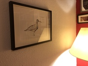 Edwyn's whimbrel in Berlin