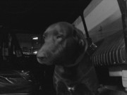 my dog in the fire truck