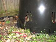 Invaded compost bin