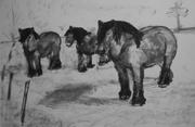 44-Horses BW