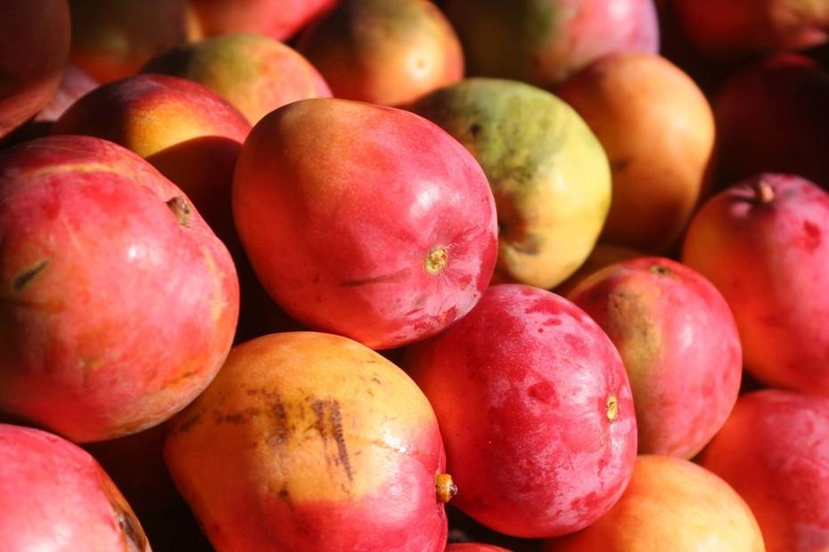 Marling de Cuellar FruitOfTheGods
