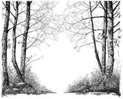 Alders at the Pond