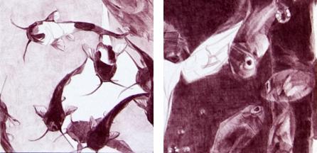 draw09-13tuscanredfishDETs