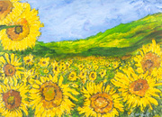 1413. sunflowers lopburri thailand