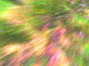 Seasonal Transmutation Suite (Video)