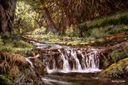 Spring Creek 1-1