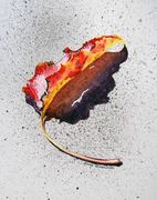 Fall Leaf_1_2010