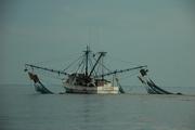 Ms. Amie shrimp boat
