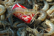 shrimp the size of a coke can
